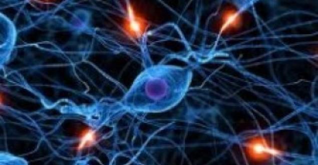 Kök Hücre Nedir? Kök Hücre Nerelerde Bulunur?