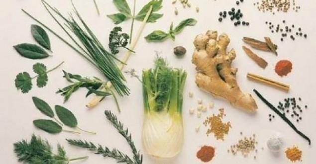 Tıbbi Bitkilerle İlk Karşılaşma | Gezi Yazısı
