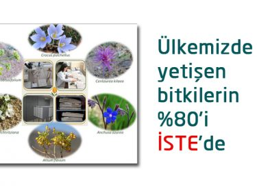 Ülkemizde yetişen bitkilerin %80'i İSTE'de