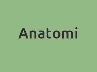 Anatomi Dersi Hakkında