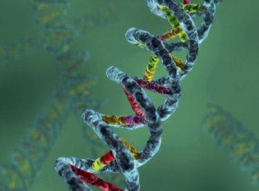 Farmakogenetik Hastalık Örnekleri