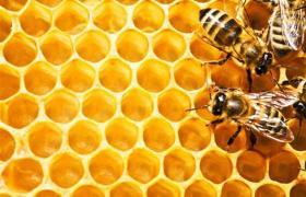 Apiterapi nedir? Apiterapi tedavisi? Arıyla tedavi nasıl olur?