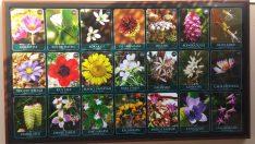 Hatay'da yetişen bitki türleri ve Tıbbi Bitkiler Müzesi