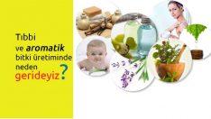 Tıbbi ve aromatik bitki üretiminde neden gerideyiz